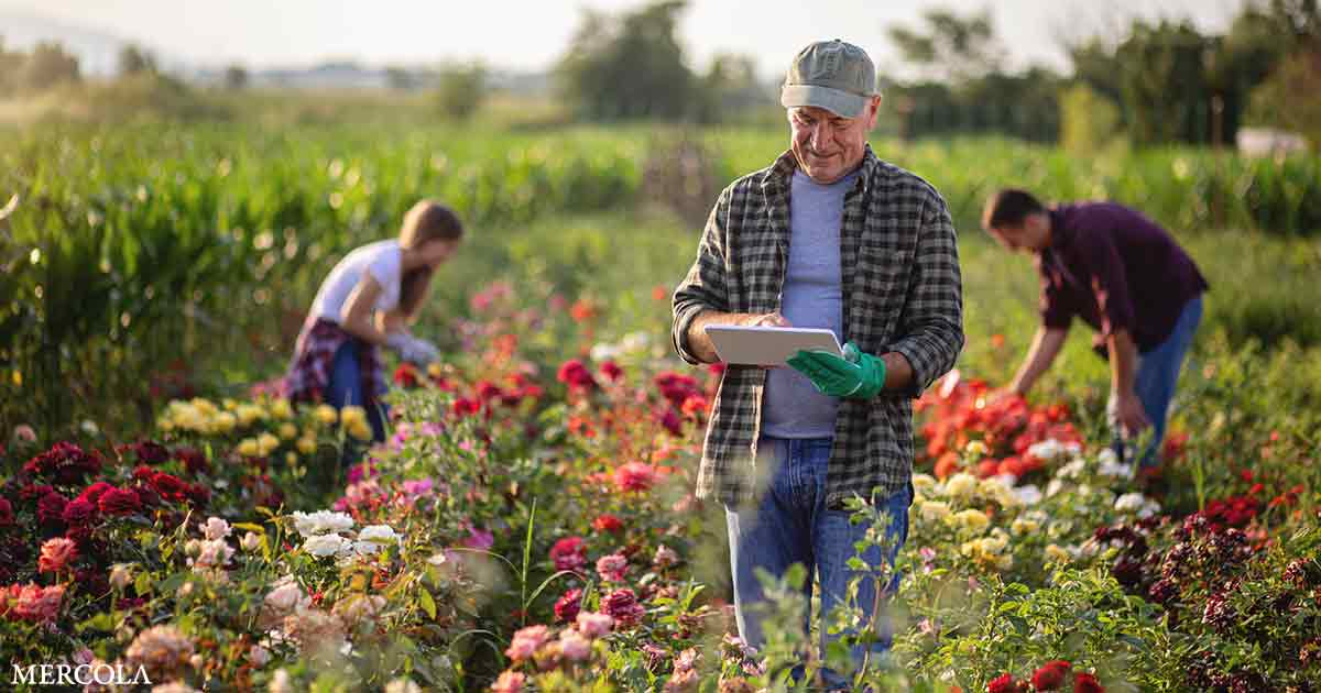 Nourish Mint — A Plan for Farmers and Natural Businesses