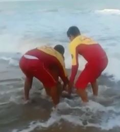 Horrifying moment blood-covered swimmer, 18, has PENIS ripped off by shark as brave lifeguards drag him back to shore